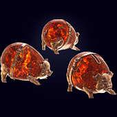 Сувенир «Свинья-копилка» из янтаря с декором из белой бронзы или серебра 875 пробы