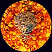 Панно «Времена года» из янтаря с декором из белой бронзы с позолотой