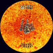 Панно «Царь-колокол» из янтаря с декором из серебра 875 пробы